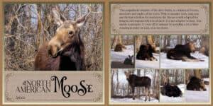 day-1-moose