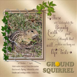 frame-quote-ground-squirrel-resized