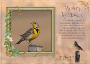 meadowlark-on-post-4-april-ecard