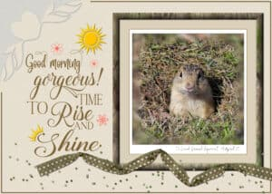quote-ground-squirrel-rise-and-shine-1