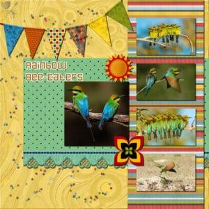 rainbow-bee-eaters-resized