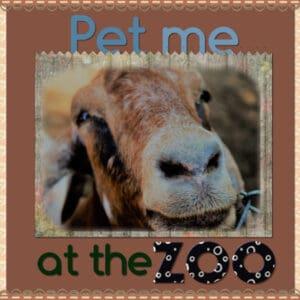 zoo-600-2