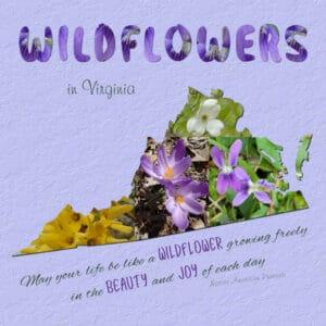2021-4-27-virginia-wildflowers-600