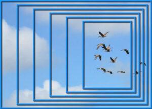 2021-5-14-cass-nestedframes-7x5-geese-600