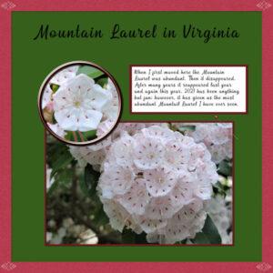 2021-5-22-mountain-laurel-inspiration-templater-600