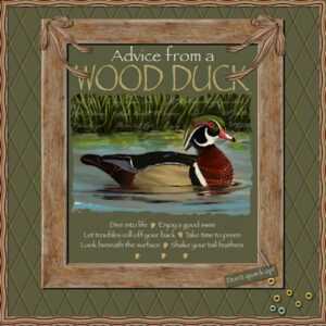 advice-from-a-wood-duck-scaled