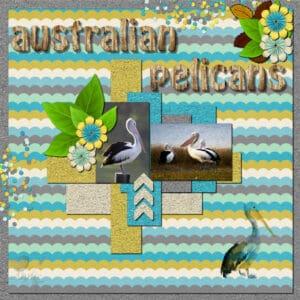 australian-pelicans-resized