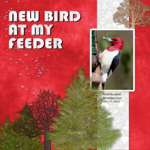 new-bird-at-my-feeder_scaled