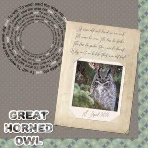 owl-great-horned
