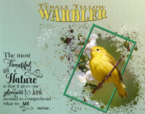quote-yellow-warbler