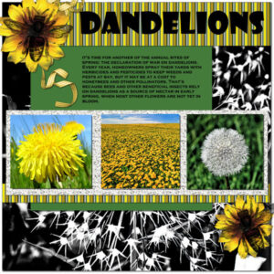 the-lowly-dandelion_scaled