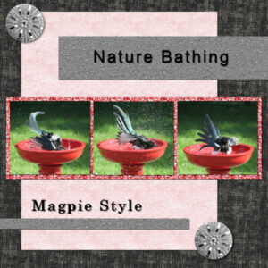 magpie-project-3-600