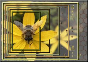 nested-frames-bee-600