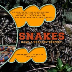 snakes-right-rs-2