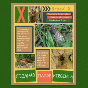 2021-5-27-cicadas-mfish-august-sampler-01-600