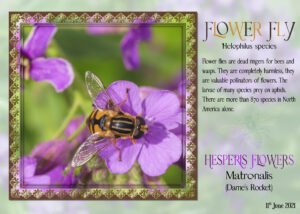 flower-fly-page