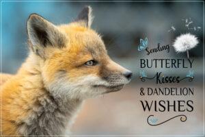 fox-cub-sending-wishes-3