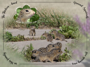 ground-squirrels-text-on-a-curve-challenge