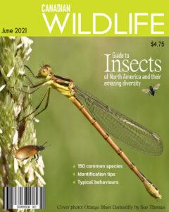 magazine-cover-wildlife