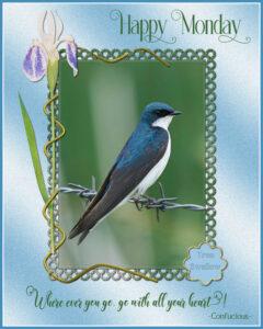 tree-swallow-2