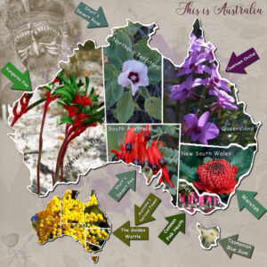 australia-state-flora-emblems