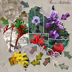 australia-state-flower-emblems-resized