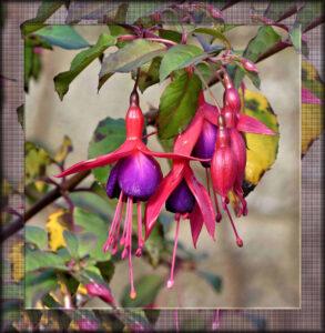 cloned-frame-flower