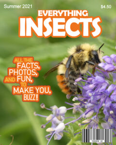 magazine-cover-bee-2