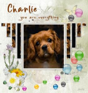 1-charlie-jpg-600-2