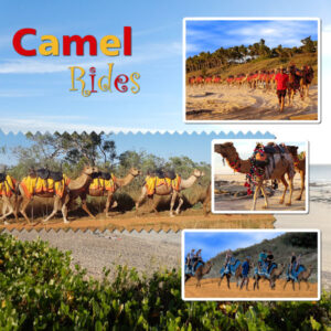 day-9-camel-rides-600