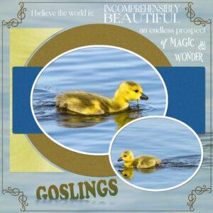 goslings-2021-july