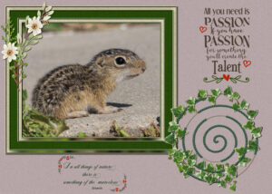 ground-squirrel-vector-path-quote