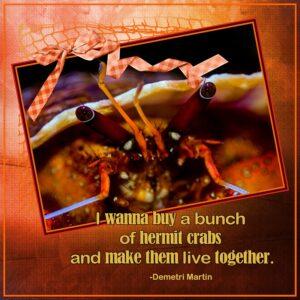 hermit-crab-rs