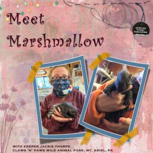 meetmarshmallow_scaled02