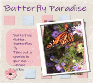 project-4-butterfly-paradise-600