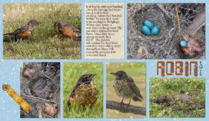 robin-family-3
