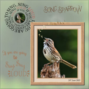 song-sparrow-text-on-a-path-challenge