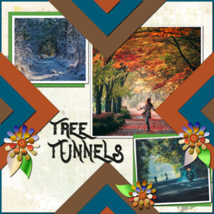 tree-tunnels_scaled