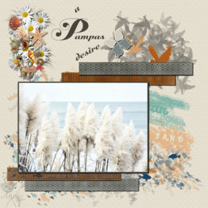 a-pampas-desire-resized