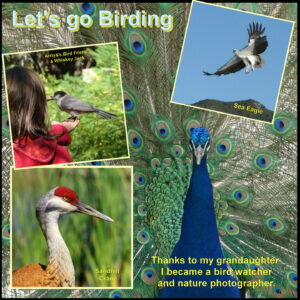 birding-hobby-s