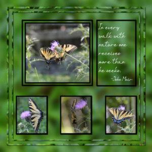 2921-9-11-sketch-challenge-sketch-07-382x400-butterflies-upper-40-600