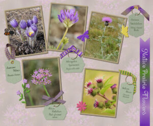 5x5x5-native-prairie-flowers