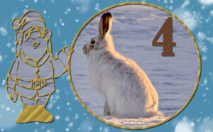 advent-day-4-3