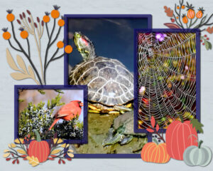 autumn-collage-2021_scaled