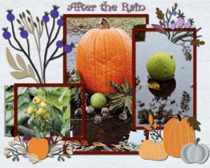 autumn-collage-6