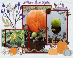 autumn-collage6