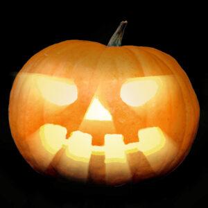pumpkin-project-1-600